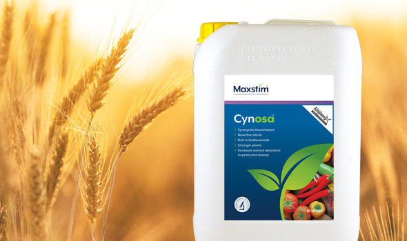 Cynosa launched