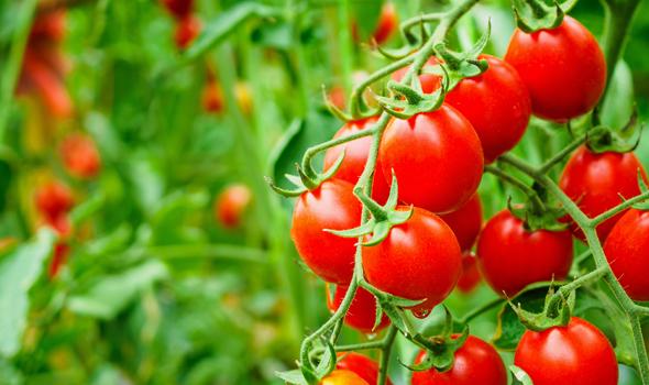 Maxstim achieves organic certification